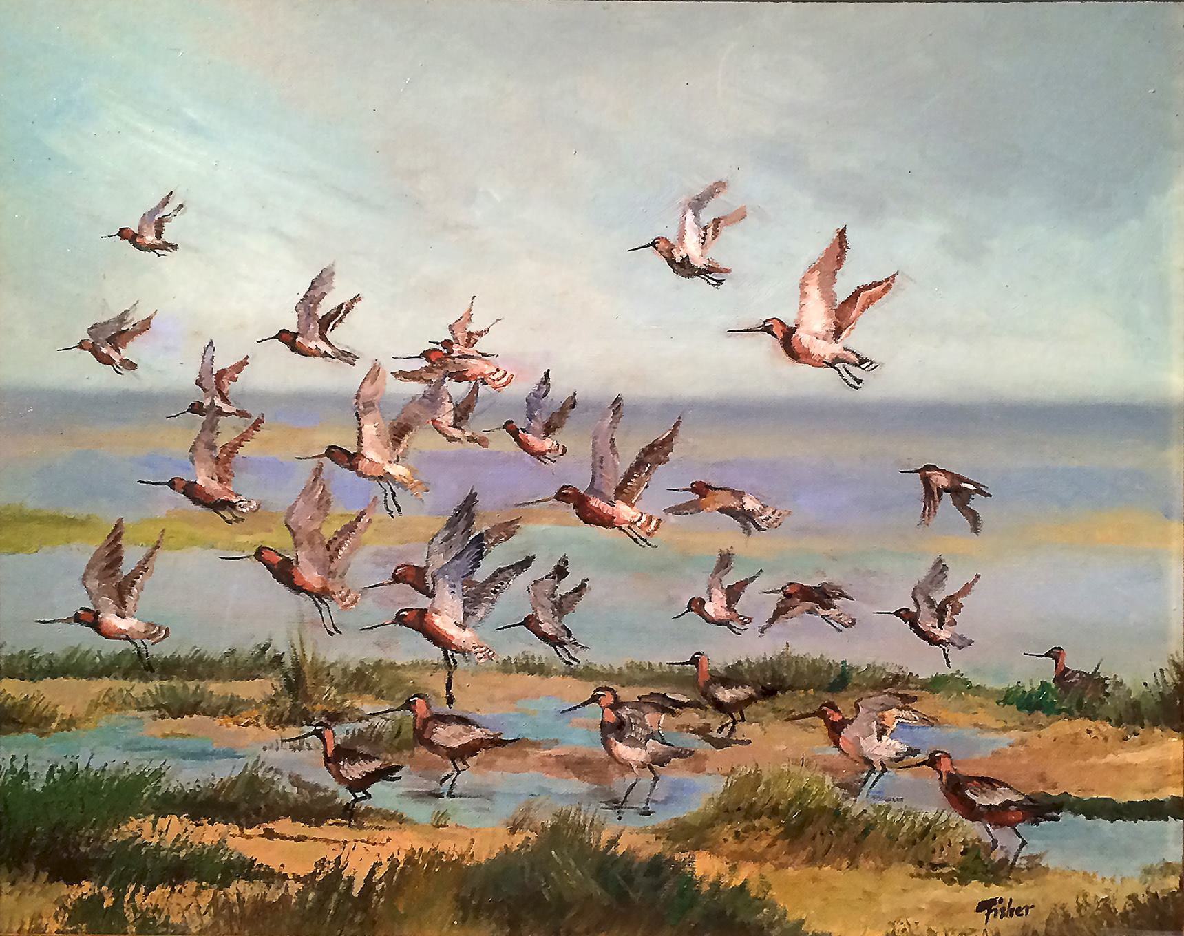 Bar-tailed Godwits by Reg Fisher