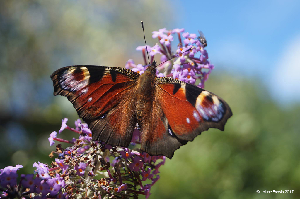 Butterfly by Louise Frewin at the West London Photo Exhibition